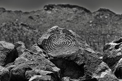 Spiral Pattern of Rock Art (Black & White, Saguaro National Park)