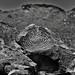 Spiral Pattern of Rock Art (Black & White, Saguaro National Park)