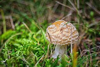 A Shortcut To Mushrooms (iii)