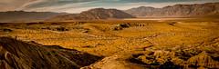 DSCF0842 (rjosef) Tags: borrego desert