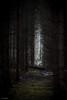 forest way (sami kuosmanen) Tags: suomi sky syksy autumn art europe exposure expression emotion eerie horror finland forest tree tumma travel oak t metsä maisema luonto light landscape