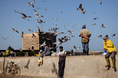 Morning at the docks (Nicolas Bussieres (Lost Geckos)) Tags: morocco essaouira seagull fishermen