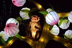 Monkey Magic (Keith Mac Uidhir 김채윤 (Thanks for 5.5m views)) Tags: wild lights light dublin zoo dublino dublín ireland ierland irlanda irlande irland irsko irlanti irska irlandia írország írẹ́lándì irish china chinese lanterns asia asian night colour color colorful colourful culture park bright