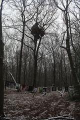 IMG_1993 (ihambi) Tags: hambi hambacherforst hambach hambacher kohleprotest earthfirst kohle occupation forestoccupation forest co2 coal climatechange climatecamp climate braunkohle breakfree solidarity