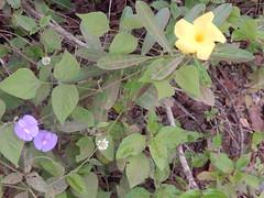 DSCN2523 (Caroline Campagni) Tags: pantanal unesp rio claro carol campagni biologia bióloga savana estépica