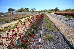 Cranbourne RBG Nov 2017 100 (Graeme Butler) Tags: water landscape history gardens australianplants architecture victoria australia