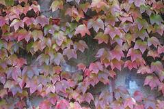 fall (1) (pedro4d) Tags: canon a1 5014 konica vx100 expired film analog polska jesień poland autumn fall polen herbst poznań szeląg nature