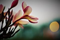 Deslumbre (salezio wagner) Tags: flores luz colorido perfume