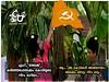 ചില കൊടികൾ അങ്ങനെയാണ് രമണാ..!! #icuchalu #currentaffairs #politics Credits : Banu Quraiza ©ICU (chaluunion) Tags: icuchalu icu internationalchaluunion chaluunion