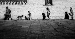 The rhythm of life (Frank Busch) Tags: frankbusch frankbuschphotography asia bw bhutan blackwhite blackandwhite bumthang dog monastery monochrome people travel walking wall wwwfrankbuschname