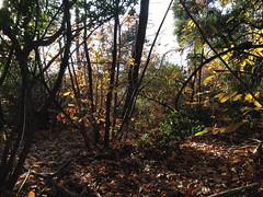 65 (emmess2) Tags: campiglia cinqueterre spezia autumn fall leaves