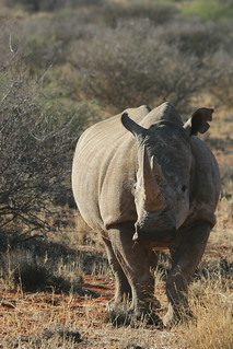 South Africa Hunting Safari - Northern Cape 83