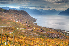 Autumn Vineyards (hapulcu) Tags: ch genfersee lavaux leman schweiz suisse suiza svizzera switzerland vaud waadt automne autumn autunno herbst høst lac lake toamna vineyard