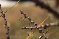 lichen (bulbocode909) Tags: valais suisse lichen branches arbres mélèzes automne nature montagnes vert orange
