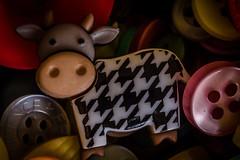 Buttons (Matthew Johnson1) Tags: hmm buttonsandbows macromondays cow button close macro fun cute sweet