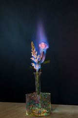 """Burning Flower 1 • <a style=""""font-size:0.8em;"""" href=""""http://www.flickr.com/photos/56830416@N05/24955527688/"""" target=""""_blank"""">View on Flickr</a>"""