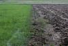 CKuchem-4867 (christine_kuchem) Tags: acker ackerland ackerrand agrarlandschaft bearbeitung ernte feld felder grünland landwirtschaft pflug sommer stoppelfeld gepflügt umbrochen