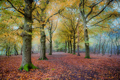 I sit in solitude, surrounded by trees (Ingeborg Ruyken) Tags: dropbox autumn november rosmalen bomen trees forest bos 500pxs fall natuurfotografie 2017 rosmalensezandverstuiving flickr herfst