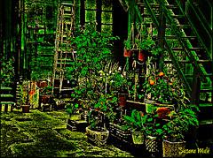 reminiscencias (susanamule) Tags: patio macetas malvones boca escalera reminiscencias