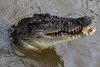 Wanna play with me? (betadecay2000) Tags: croc adelaide river northern territory autralia springendes krokodil im fluss autralien februar outdoor 2016 januar janary darwin australien austrlia australie salzwasserkrokodil saltie wasser