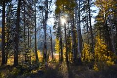 DSC_9245 (Schnauzergal) Tags: fallcolors fallfoliage naturebynikon nature trees california nikon landscape