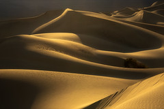 Desert Waves (jojo (imagesofdream)) Tags: dunes desert deathvalley california sand
