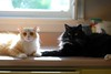 Jimmy's funny face (rootcrop54) Tags: jimmy orange ginger tabby male cat batman tuxedo kitchen counter shenanigans neko macska kedi 猫 kočka kissa γάτα köttur kucing gatto 고양이 kaķis katė katt katze katzen kot кошка mačka gatos maček kitteh chat ネコ multiple