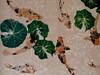 Koi Painting (reflection below) (Robert Cowlishaw (Mertonian)) Tags: koi hawaii thebigisland dependence community orange green pond mertonian robertcowlishaw pondering spiritual canon powershot g7x mark ii canonpowershotg7xmarkii faith