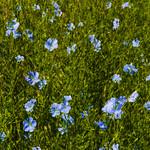 Flora Plenteous 5 thumbnail