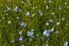 Flora Plenteous 5 (pni) Tags: multiexposure multipleexposure tripleexposure flower plant rosenlunds aspegrens trädgård puutarha graden j12 jakobstad pietarsaari finland suomi pekkanikrus skrubu pni