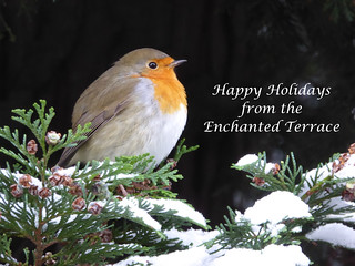 Trudy the Junior Robin's Holiday Wishes ;-) Please read!