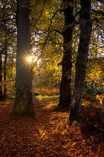 Cloughlea sunset
