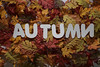 Autumn_14 (Julliard Kenneth) Tags: red fall autumn maple leaves colorful stockphotography stockphotos