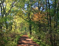 Scieżka spacerowa 89 (Hejma (+/- 5400 faves and 1,7 milion views)) Tags: zator stawy aleja spacerowa drzewa krzewy jesień