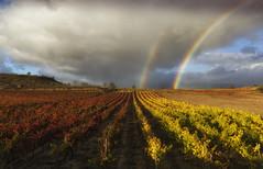 Follow the rainbow (Rafael Díez) Tags: españa larioja sanasensio viñas paisaje otoño arcoiris rainbow rafaeldíez filtro polarizador nubes