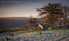 A Cold and Frosty Morning (.Brian Kerr Photography.) Tags: cumbria landscapephotography hartsidepass hartside pennines crossfell sony a7rii landscape photography outdoor outdoorphotography opoty nature naturallandscape natural weather frost cold coldmorning tree oldbuilding grass mountain
