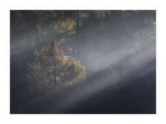 Levity (Vemsteroo) Tags: peakdistrict thepeaks autumn fall treeforest woodlands mist light winter cold beauty beautiful derbyshire padleygorge bright glorious canon 5d mkiv 100400mm sunrise morning nature landscape outdoors