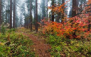Symphony of Autumn
