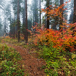 Symphony of Autumn thumbnail