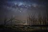 Fallen tree (karinavera) Tags: longexposure night photography ilcea7m2 buenosaires solitary mystery epecuen starrynight sky milkyway stars