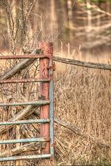 Rusty gate (jaros 2(Ron)) Tags: gate rust nikond800 ontario canada field rustygate