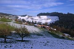 Oberthal am 17.11.2017 (Martinus VI) Tags: oberthal möschberg emmental kanton canton de bern berne berna bernese berner automne schweiz suisse suiza switzerland svizzera swiss y171117 martinus6 martinus6xy martinusvi martinus