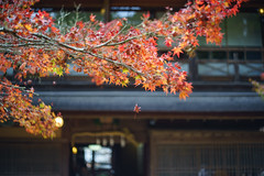 Miyajima 2017/11/19 (hs_8585) Tags: sony α7 ricoh xrrikenon50mmf2l hiroshima miyajima 広島 宮島 紅葉