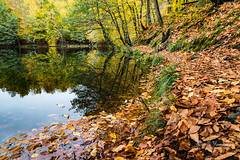 Leaves and Lake (Ali Yamaner) Tags: leaves autumn fall herbst lake water nature park yedigöller outdoor trees orange bolu