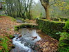 El puentecito (Asun Idoate) Tags: nafarroa elizondo musgo hojassecas puente