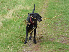 Grrrrrrrrrr (Lexie's Mum) Tags: continuing30dayswild walking walks walkingthedog nature wildlife scenery floraandfauna dog lester stick