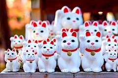 The lucky Cats of Gotokuji (Dakiny) Tags: 2017 winter december japan tokyo setagayaward gotokuji city street temple gotokujitemple autumnleaves autumncolors maple red bokeh d750 afsnikkor50mmf18g nikonafsnikkor50mmf18g