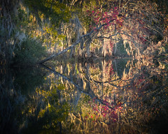 The Fading Autumn Light (Charles Opper [Catching Up]) Tags: autumn canon fall georgia richmondhill color evening forest landscape light mood nature outdoor reflection symmetry warm water