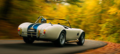 Historic Autumn Rally I (Jens van Bellen) Tags: gran turismo sport car track race game ps4 pro 4k photography vsco film rally autumn leaves red orange green yellow road shelby ac cobra