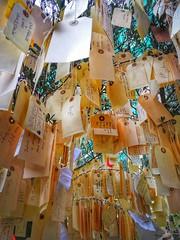 The wish tree...☮️and💛 (carlesbaeza) Tags: wish deseo desig paz pau love peace amor salud
